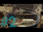 BEFORE - le pigeon de noël