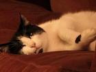 Chat Minou - Le chat star